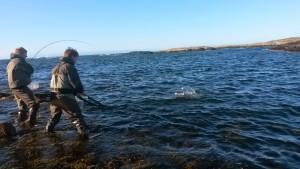 Sjøørretfiske - Filmer