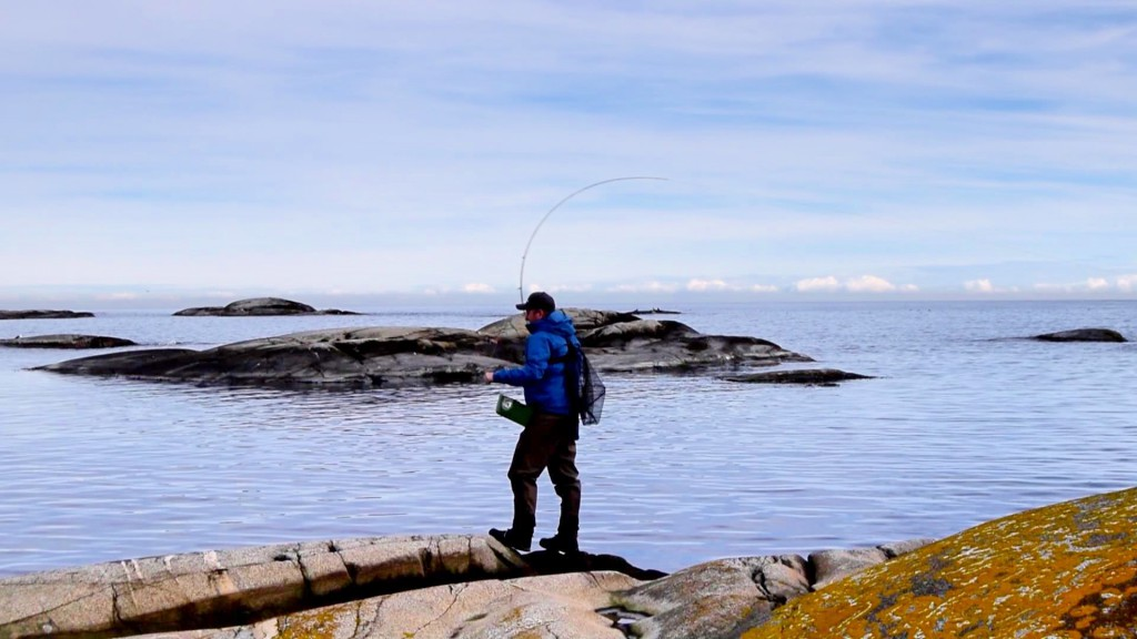 Arctic silver i aksjon